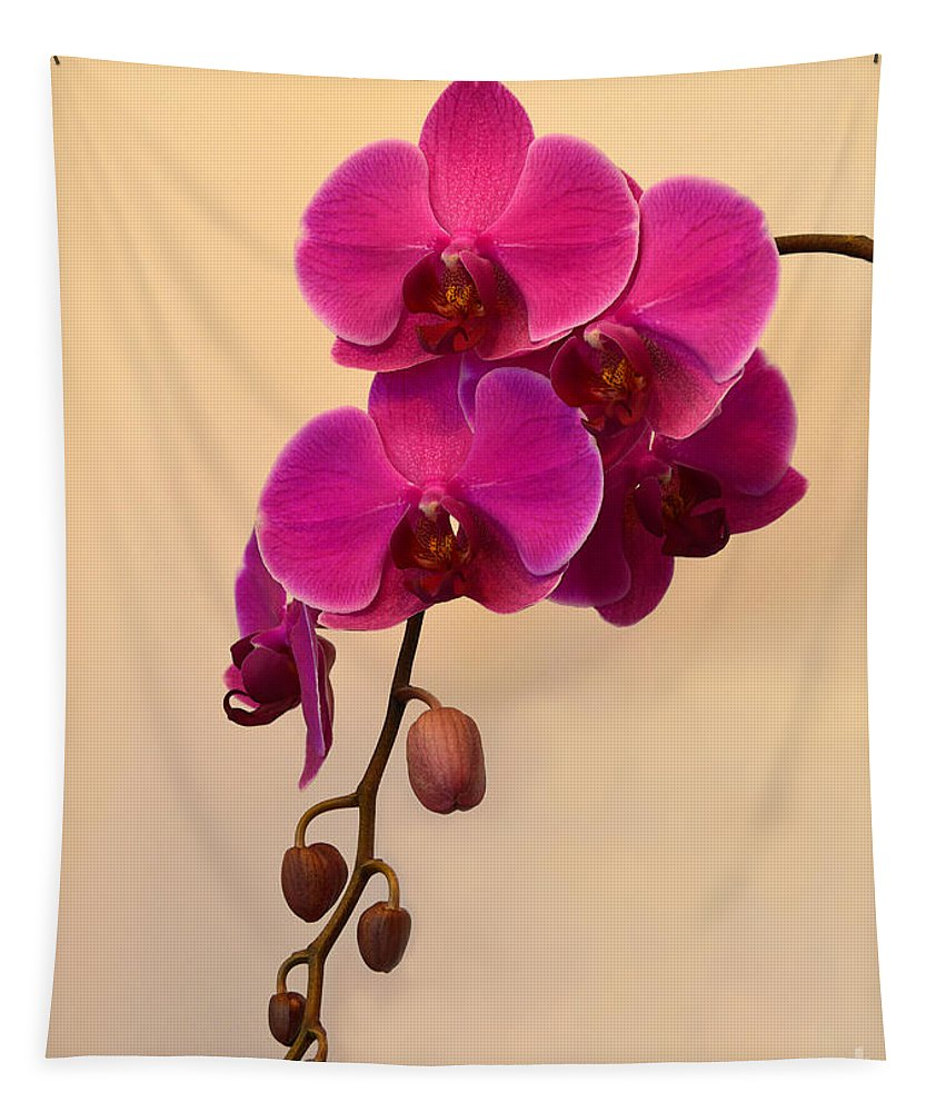 Orchid Tapestry featuring the photograph Magenta Phalaenopsis Orchid by Catherine Sherman