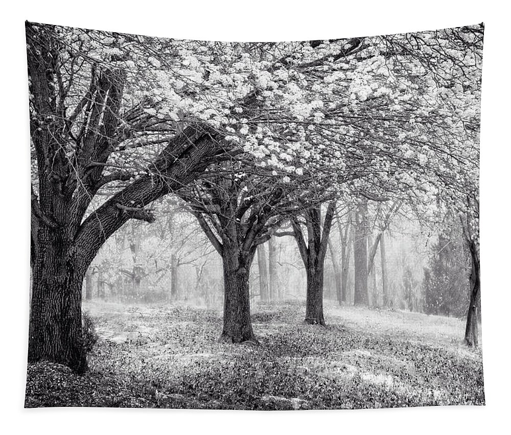 Appalachia Tapestry featuring the photograph Magical Meadow by Debra and Dave Vanderlaan