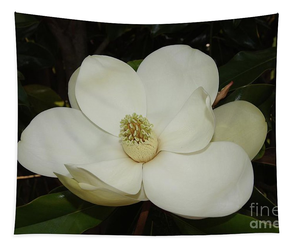 Magnolia Tapestry featuring the photograph Magnolia Blossom 5 by Megan Cohen