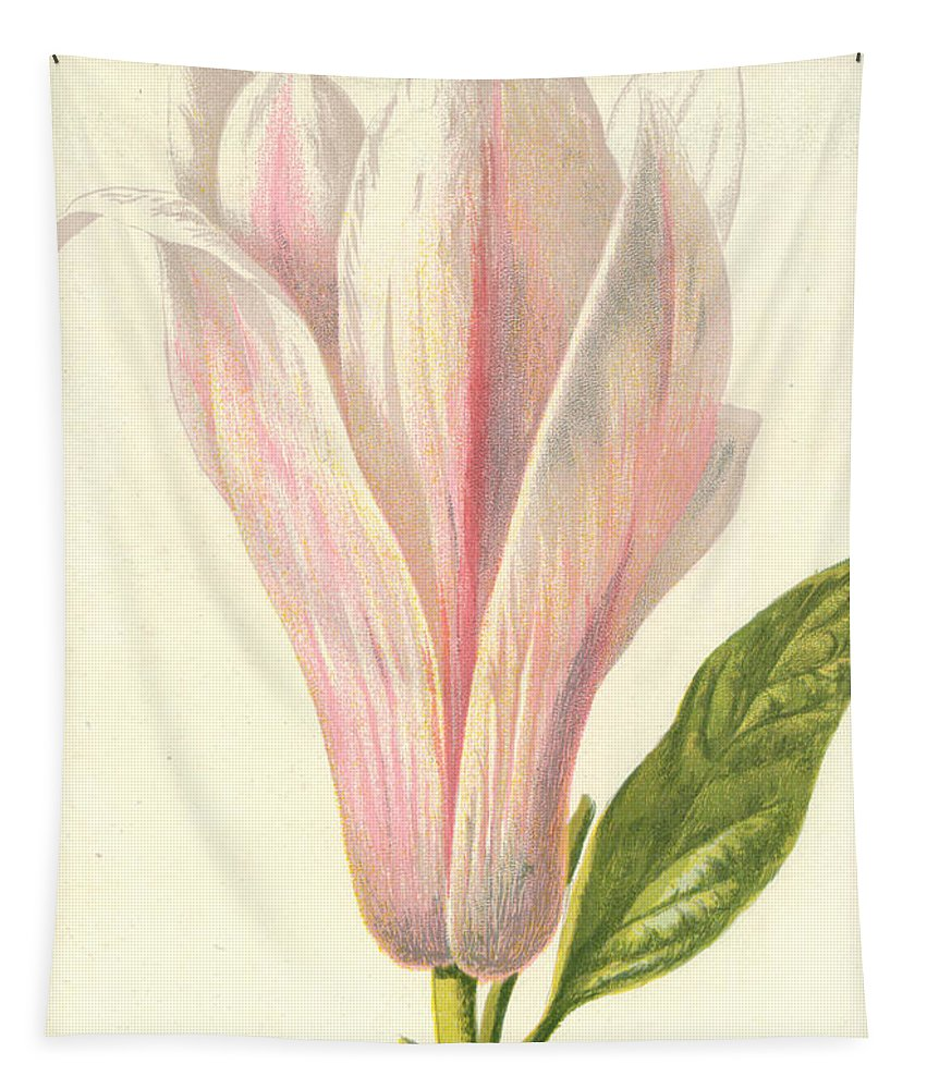 Magnolia Tapestry featuring the painting Magnolia by Frederick Edward Hulme