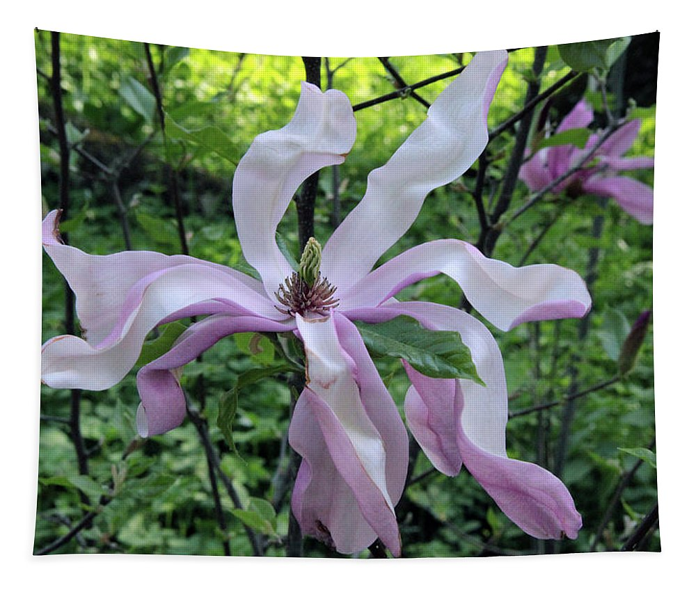 Magnolia Soulangeana Poster Tapestry featuring the photograph Magnolia Soulangeana by Sergey Lukashin