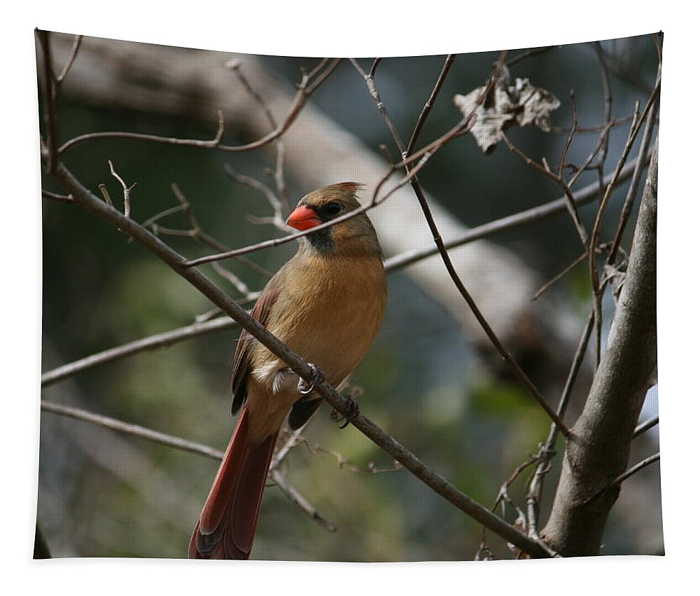 Bird Tapestry featuring the photograph Cardinal by Cathy Harper