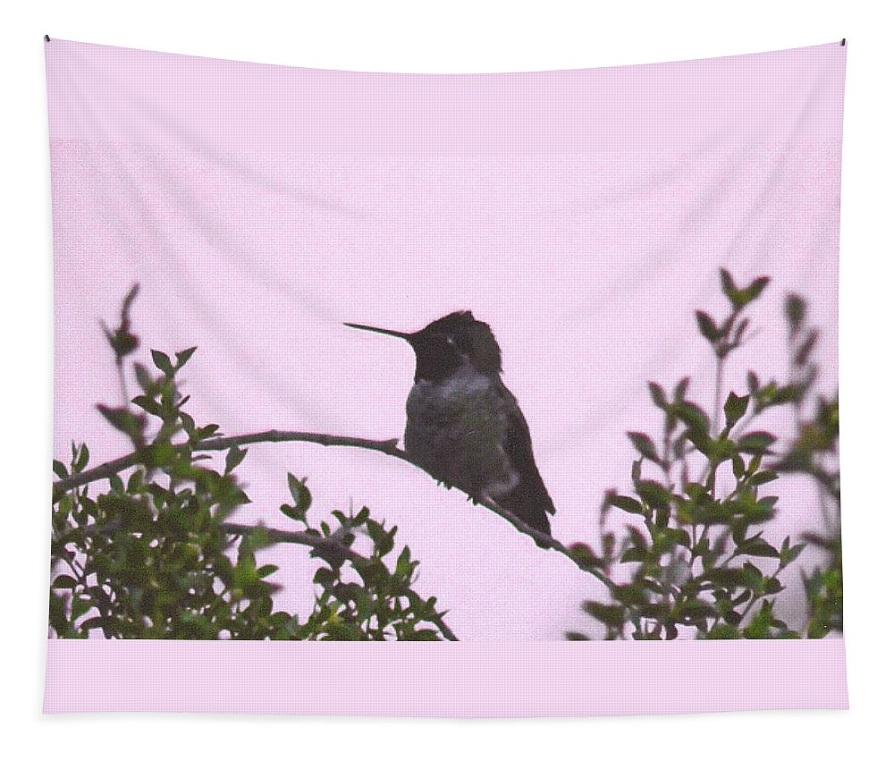 Animals Tapestry featuring the photograph Male Costa's Hummingbird With Mauve by Judy Kennedy