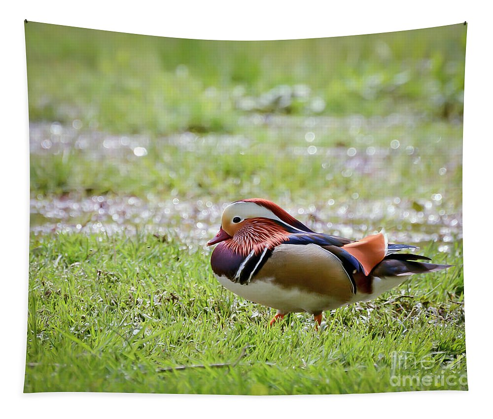 Male Mandarin Duck Tapestry featuring the photograph Male Mandarin Duck At Black Mountain by Kerri Farley
