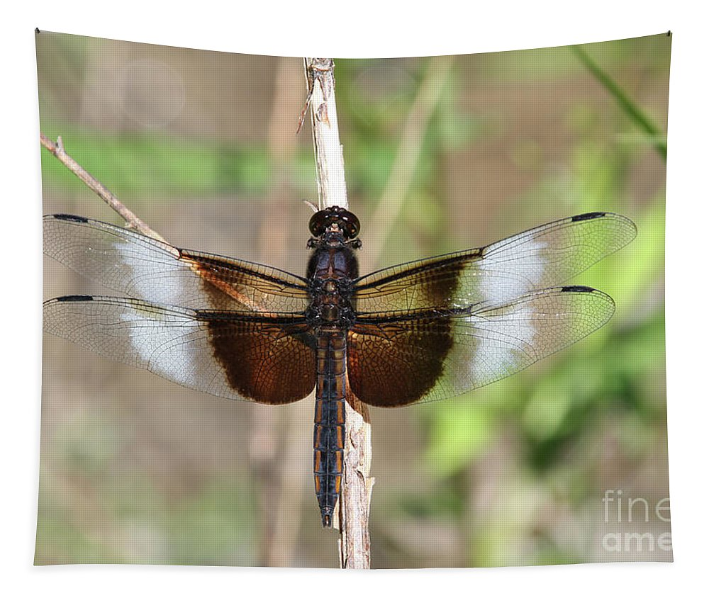 Dragonfly Tapestry featuring the photograph Male Widow Skimmer Dragonfly #2 by Judy Whitton