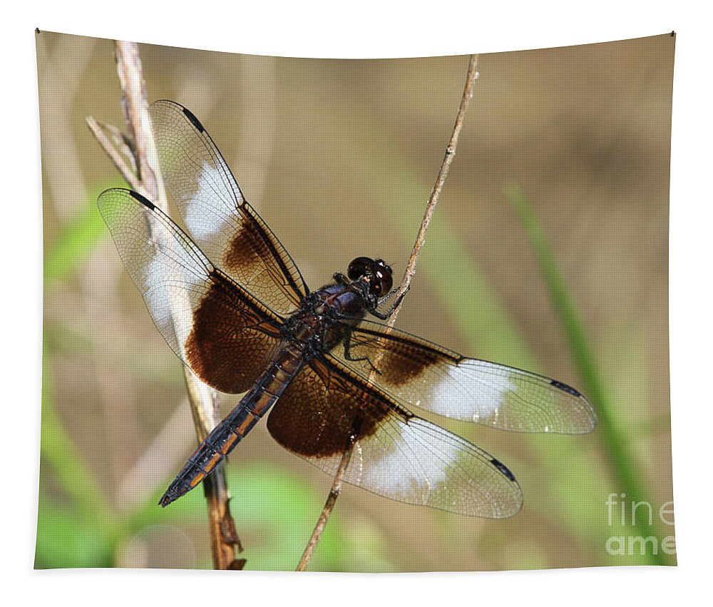 Dragonfly Tapestry featuring the photograph Male Widow Skimmer Dragonfly #3 by Judy Whitton