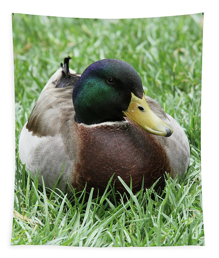 Duck Tapestry featuring the photograph Mallard Duck #2 by Judy Whitton
