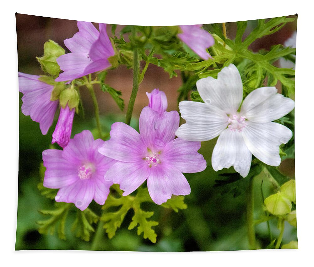 Mallow Tapestry featuring the photograph Mallow by Phyllis Taylor