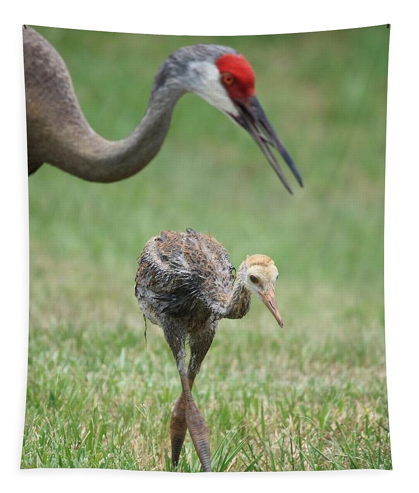 Sandhill Crane Tapestry featuring the photograph Mama And Juvenile Sandhill Crane by Carol Groenen