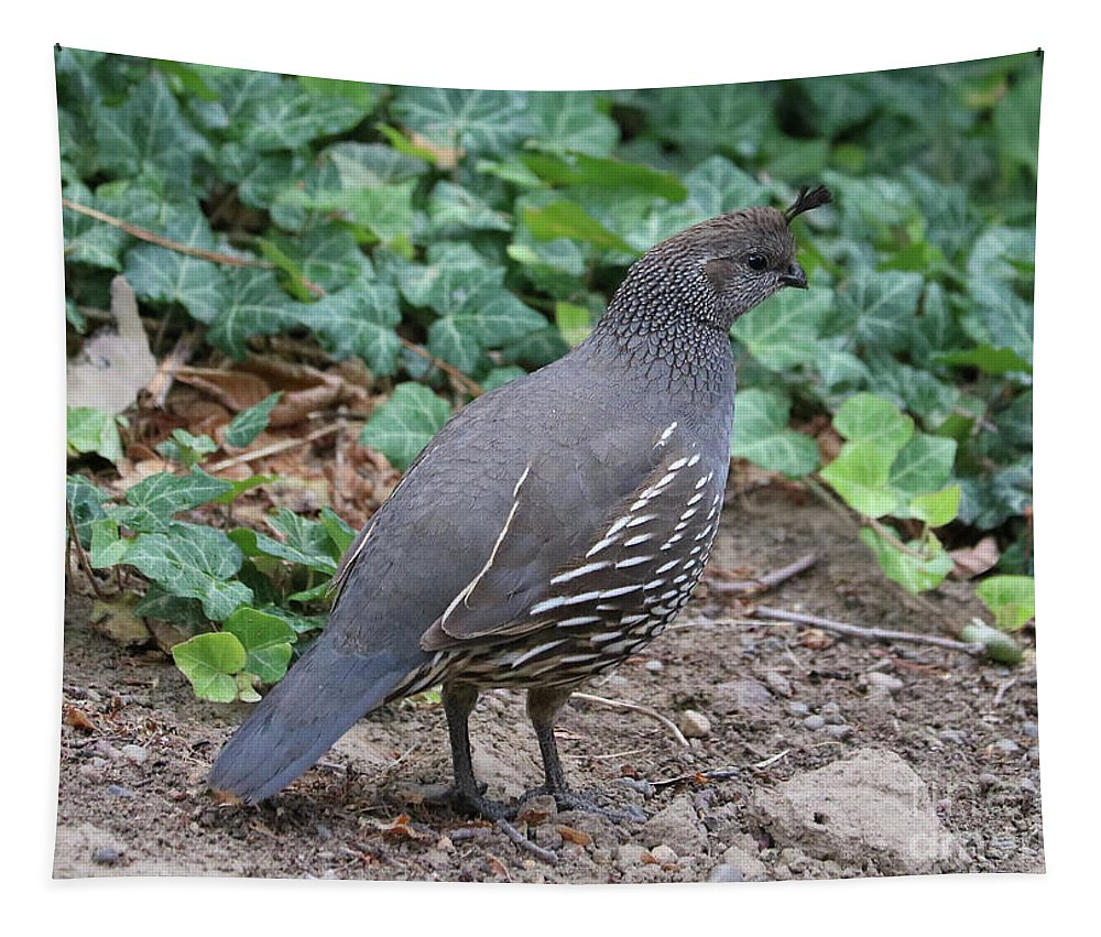 Quail Tapestry featuring the photograph Mama Quail Profile With Ivy by Carol Groenen