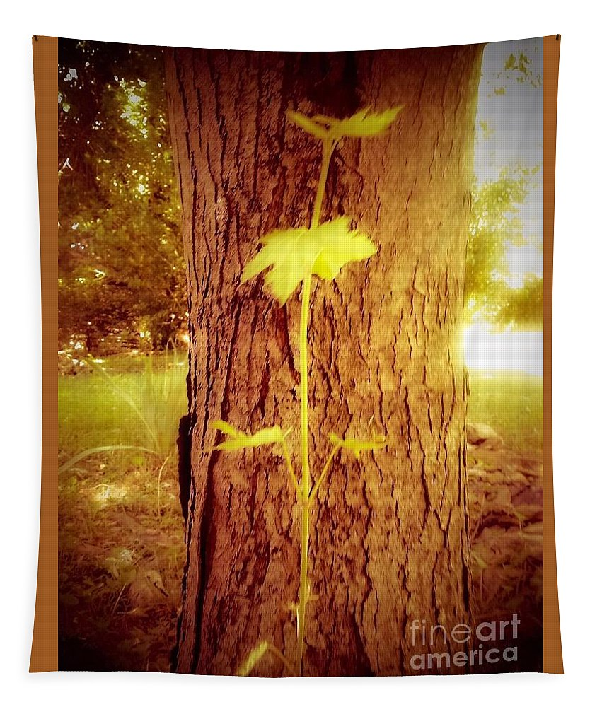 Maple Tapestry featuring the photograph Maple Branch Growing From Trunk by Debra Lynch