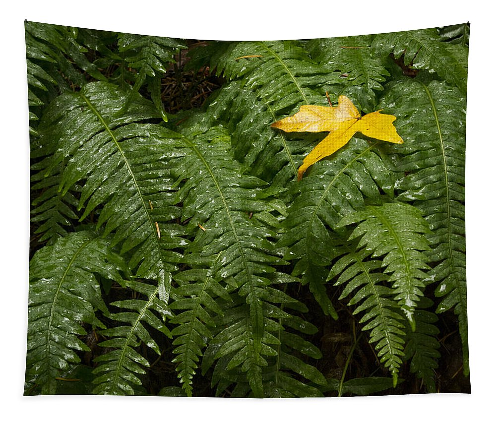 Yellow Tapestry featuring the photograph Maple On Fern by Jean Noren