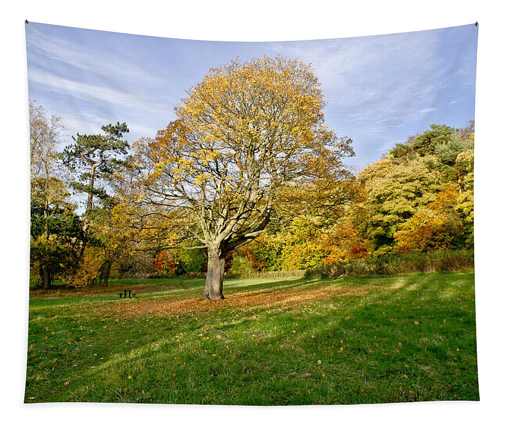 Scottish Tapestry featuring the photograph Maple Tree On The Slope. by Elena Perelman