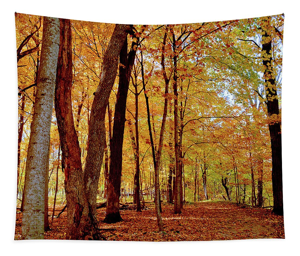 Maple Tapestry featuring the photograph Maple Woods Trail 3 by Bonfire Photography