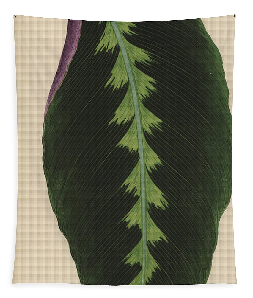 Leaf Tapestry featuring the painting Maranta Warsewiczii by English School