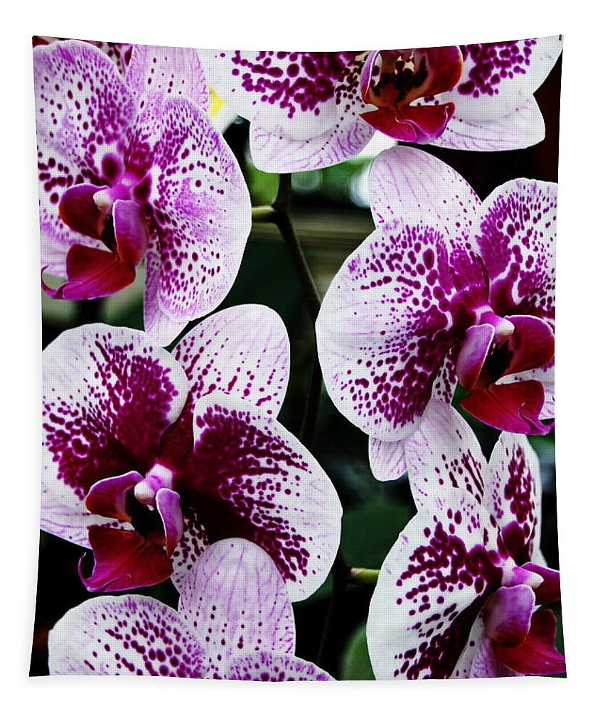 Orchids Tapestry featuring the photograph Marbled Harlequin by Debbie Oppermann