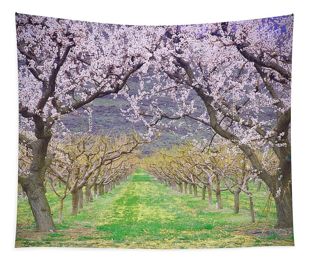 Blossoms Tapestry featuring the photograph March 28 2010 by Tara Turner