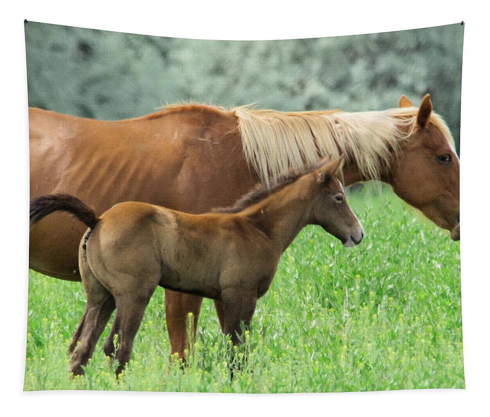 Colt Tapestry featuring the photograph Mare And Colt by Jeff Swan