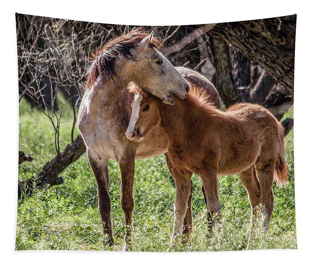 Arizona Tapestry featuring the photograph Mare And Colt by Teresa Wilson