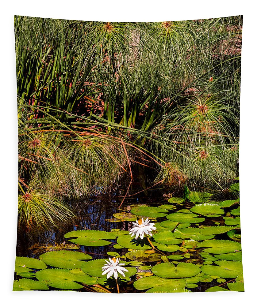 Plants Tapestry featuring the photograph Marsh Waterlilies by Zina Stromberg