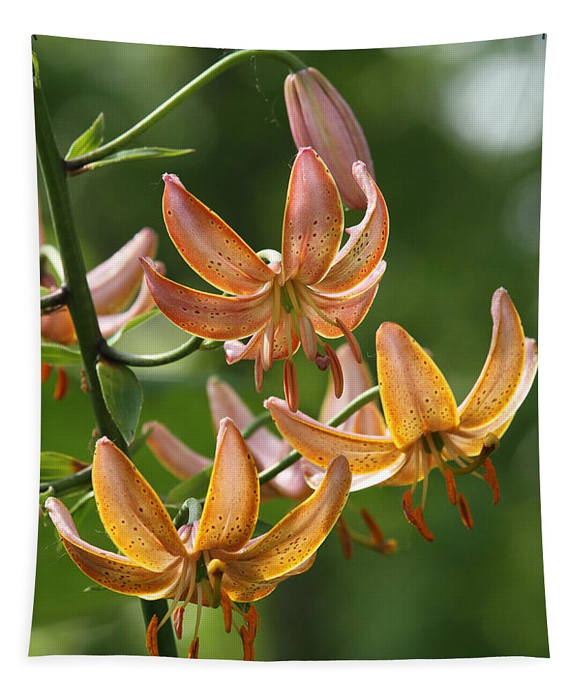 Martagon Lily Tapestry featuring the photograph Martagon Lily by Judy Whitton