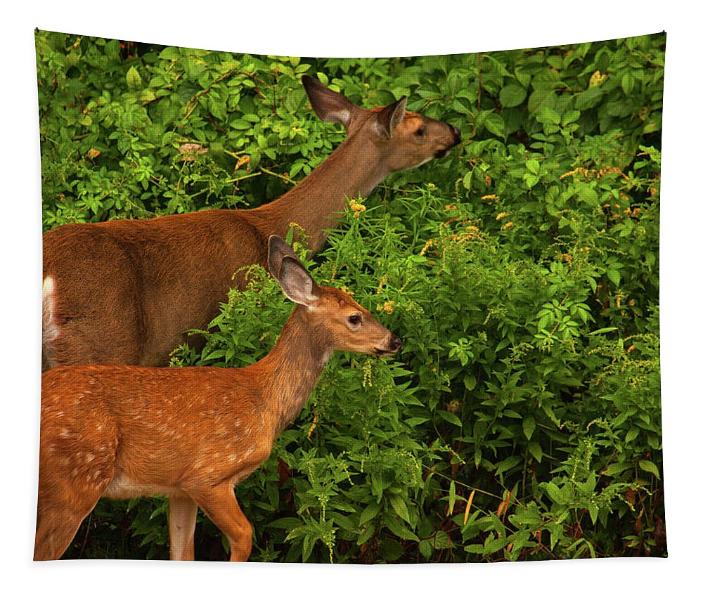 Wildlife Tapestry featuring the photograph Meal Time by Karol Livote