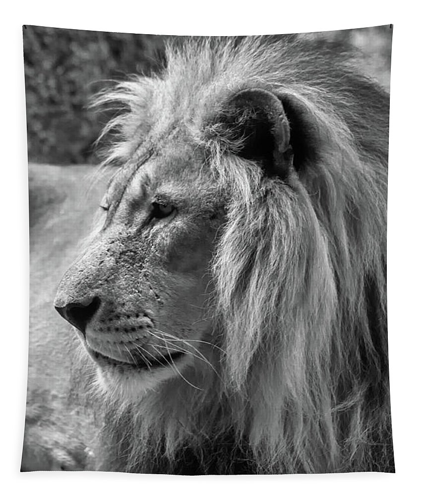Michelle Meenawong Tapestry featuring the photograph Meditative Lion In Black And White by Michelle Meenawong