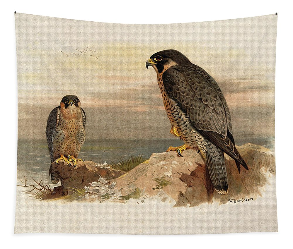 Mediterranean Tapestry featuring the mixed media Mediterranean Peregrine By Thorburn by Archibald Thorburn