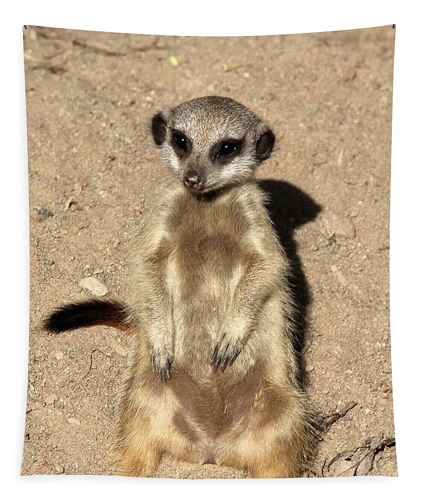 Meerkat Tapestry featuring the photograph Meerkat by Sergey Lukashin