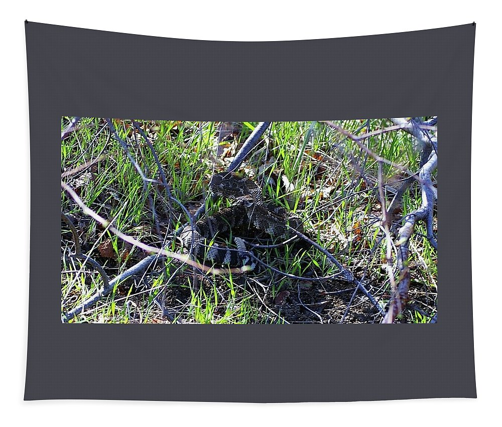 Rattlesnakes Tapestry featuring the photograph meet Ronnie the rattlesnake by Jeff Swan