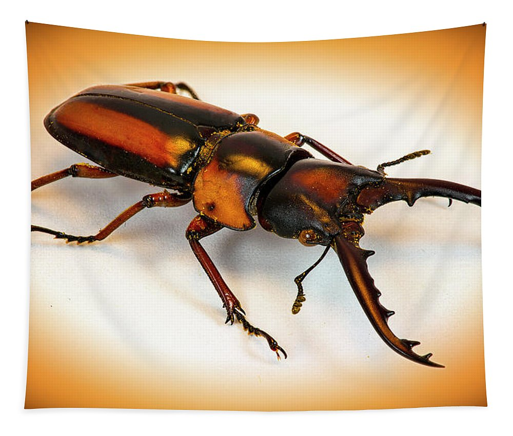 Macro Tapestry featuring the photograph Military Stag Beetle by Robert Storost