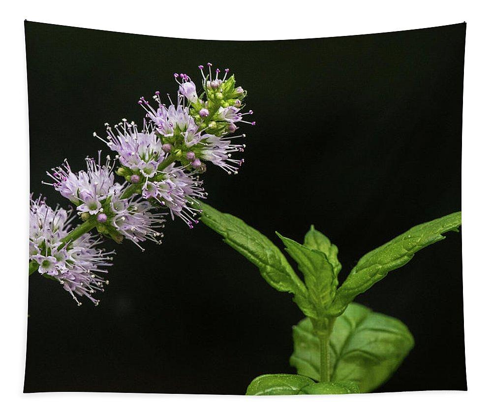 Mint Tapestry featuring the photograph Mint Flower by Matt Malloy