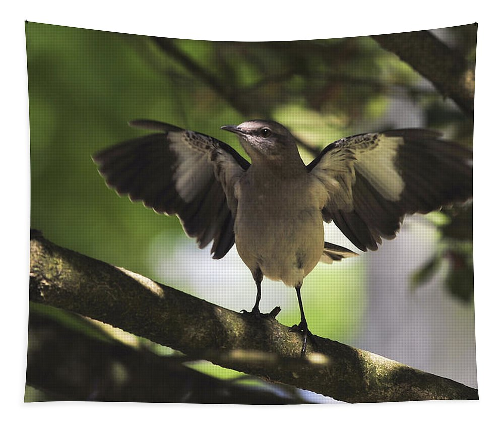 Terry D Photography Tapestry featuring the photograph Mockingbird by Terry DeLuco
