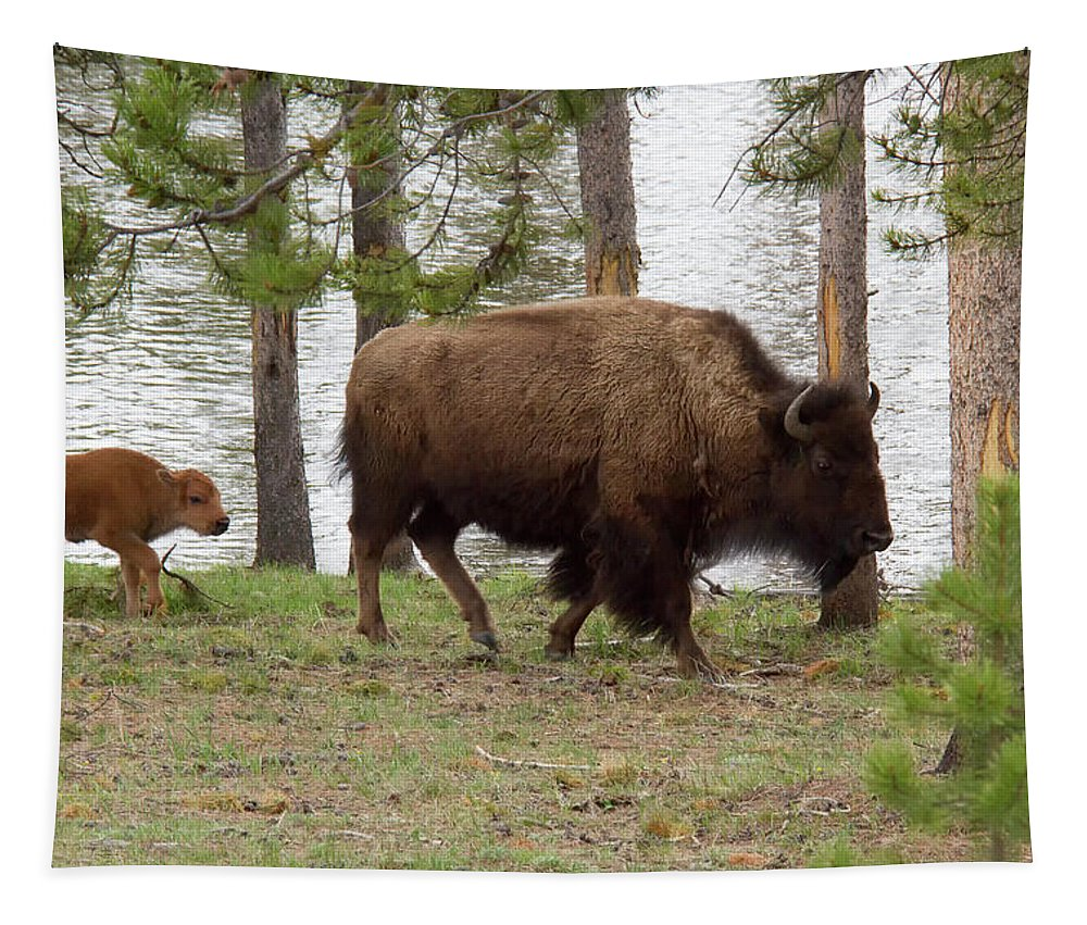 Bison Tapestry featuring the photograph Mom And Baby by Debby Richards