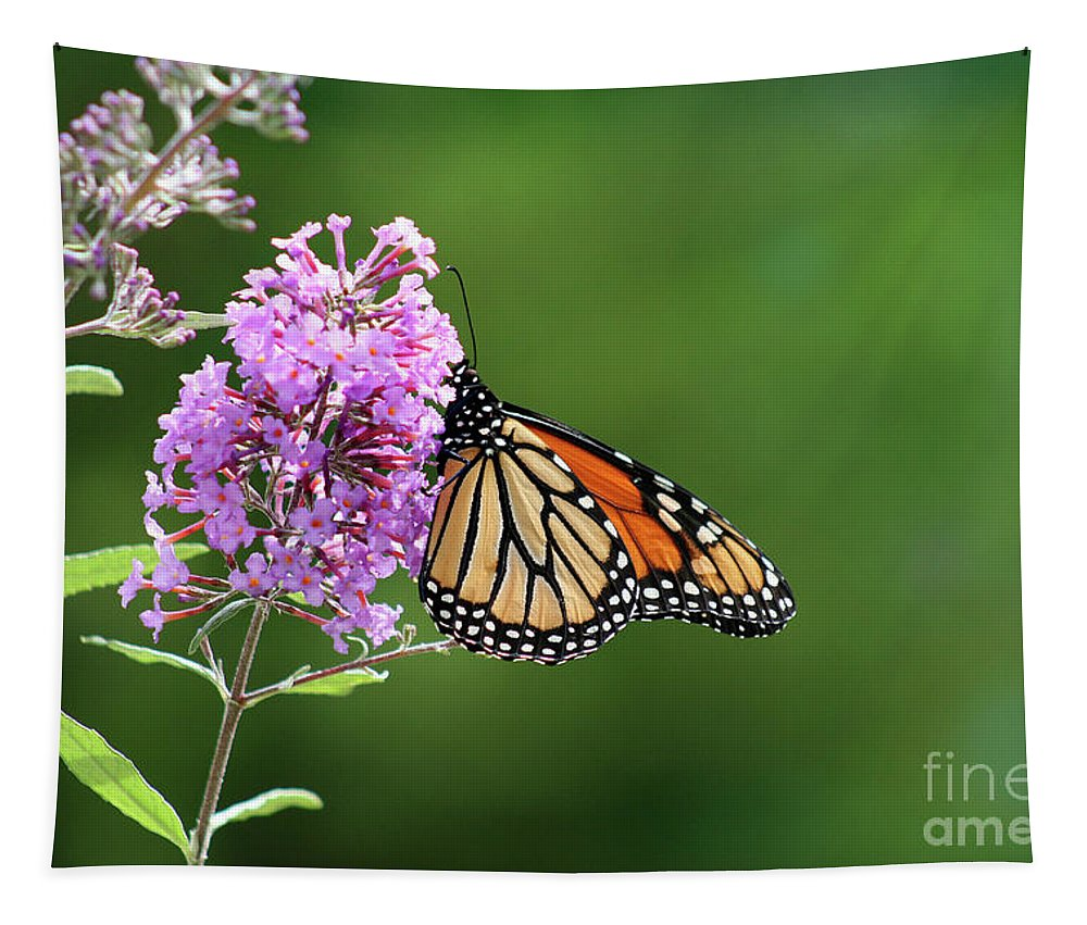 Monarch Tapestry featuring the photograph Monarch Butterfly On Butterfly Bush 2011 by Karen Adams