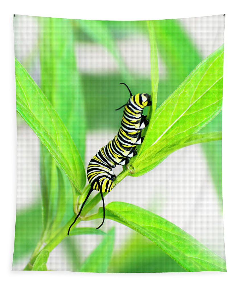 Monarch Caterpillar Tapestry featuring the photograph Monarch Caterpillar by Christina Rollo