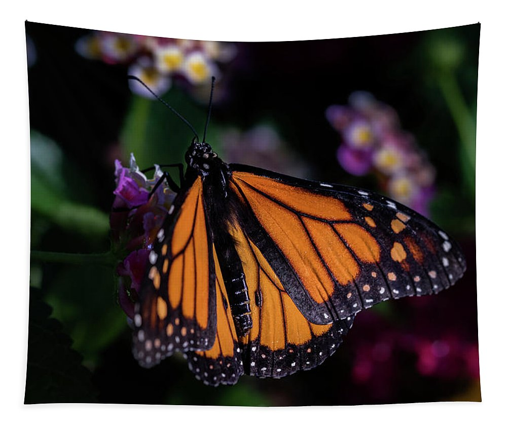 Jay Stockhaus Tapestry featuring the photograph Monarch by Jay Stockhaus