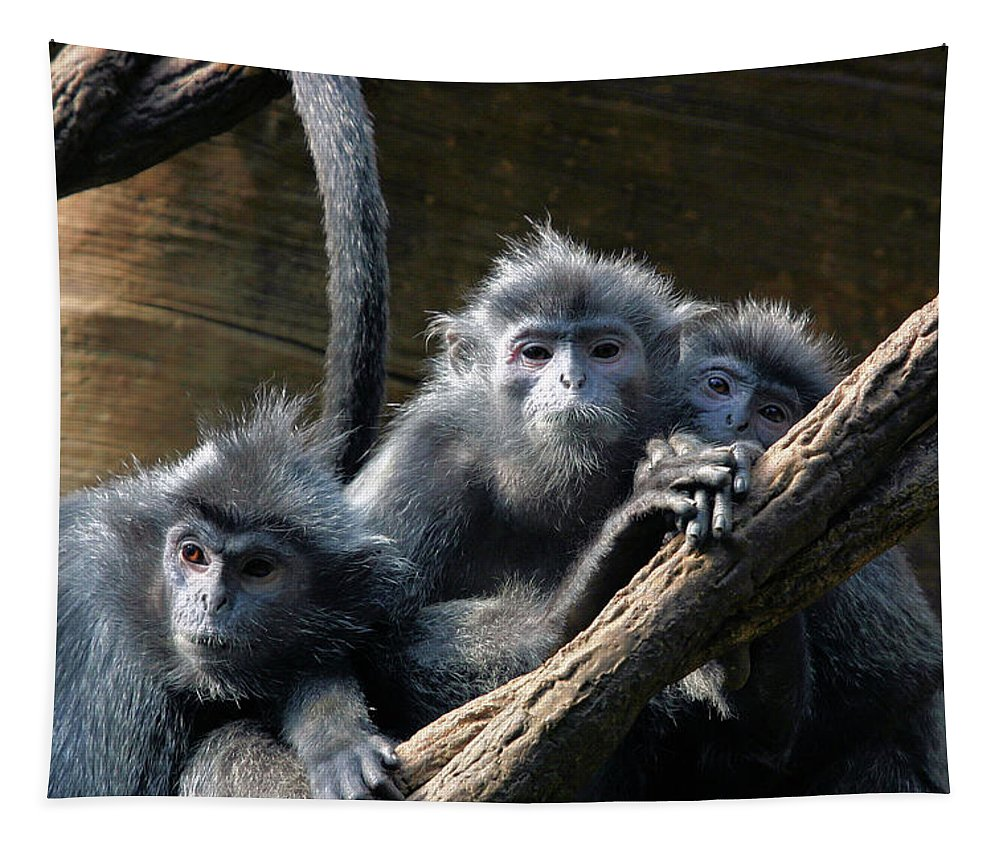 Monkey Tapestry featuring the photograph Monkey Trio by Karol Livote