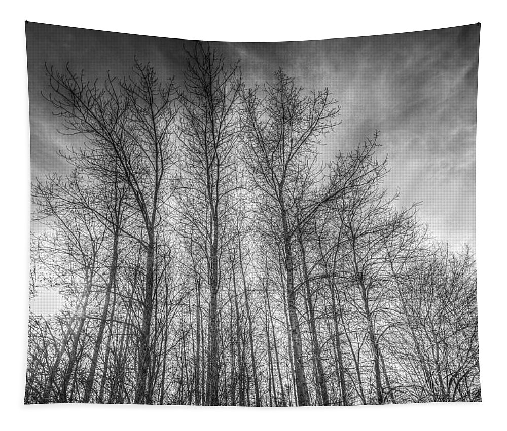 Sundown Trees Tapestry featuring the photograph Monochrome Sunset Trees by David Pyatt