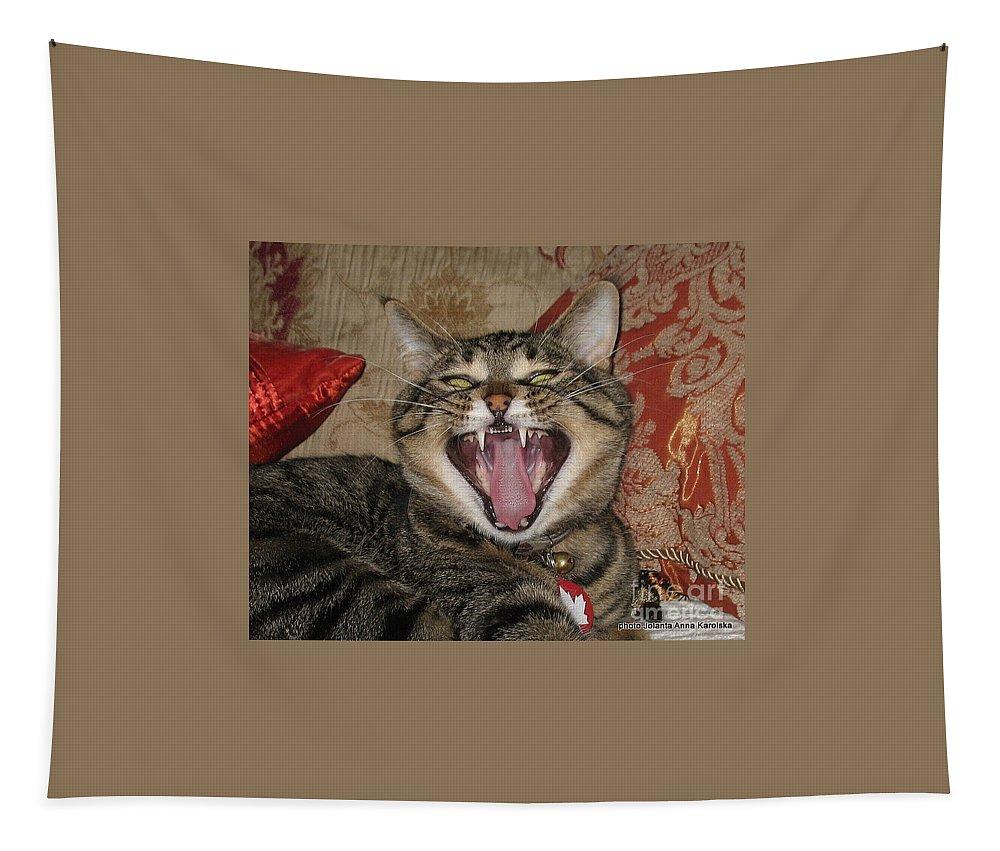 Cats Tapestry featuring the photograph Monty's Yawn by Jolanta Anna Karolska