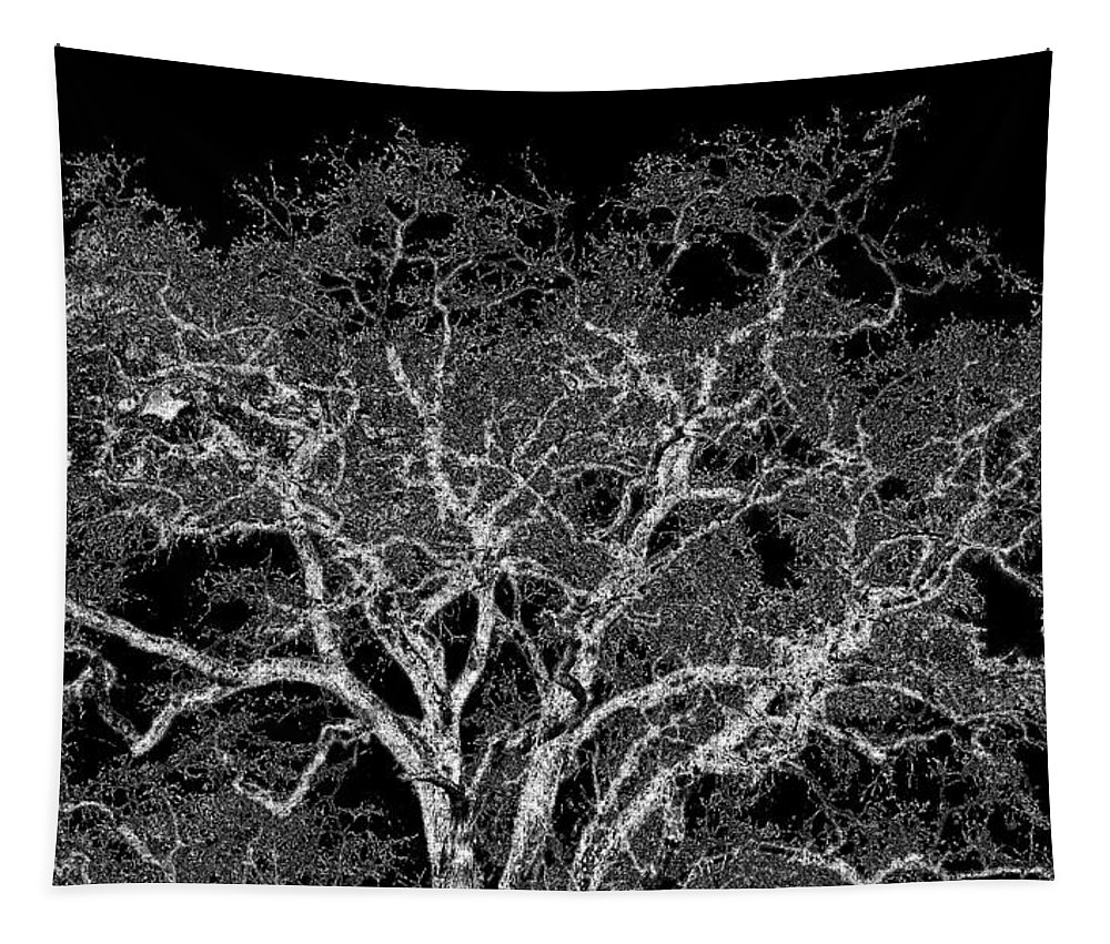 Photo Design Tapestry featuring the digital art Moonlit Night by Will Borden