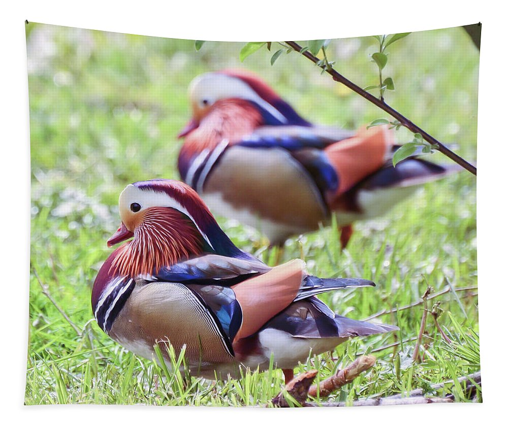 Ducks Tapestry featuring the photograph More Mandarin Ducks by Kerri Farley