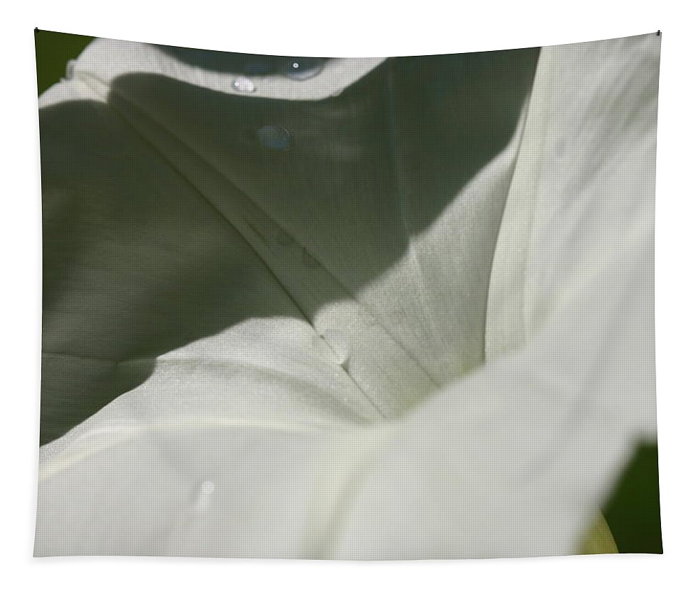 Morning Glory Tapestry featuring the photograph Morning Glory by Michael Munster