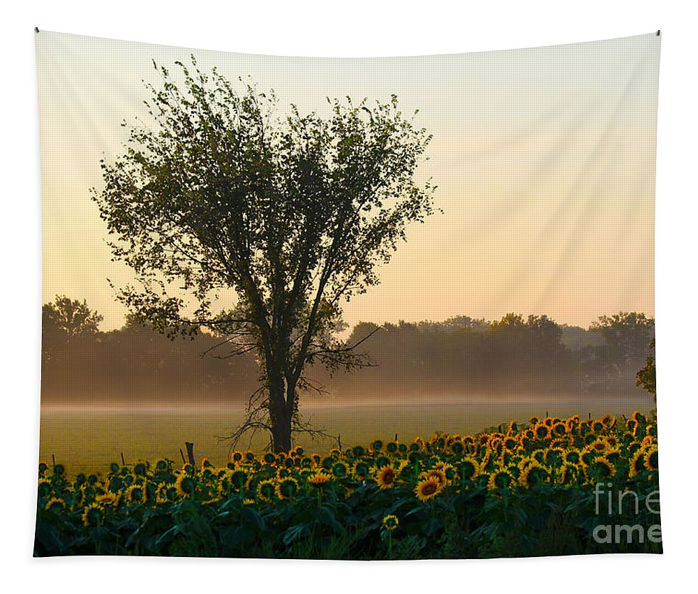 Helianthus Annuus Tapestry featuring the photograph Morning Sunflowers by Catherine Sherman