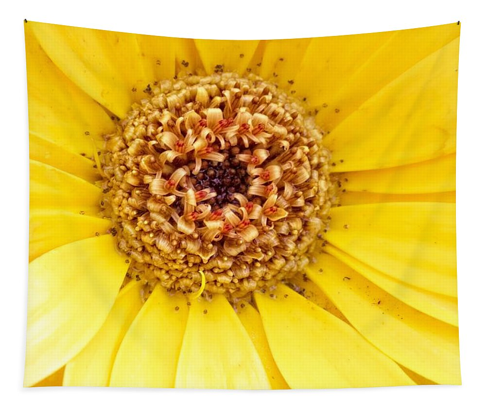 Alicegipsonphotographs Tapestry featuring the photograph Morning Sunshine by Alice Gipson