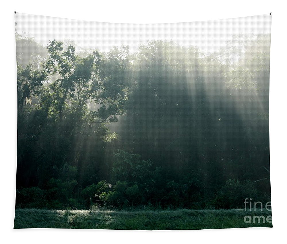 Light Tapestry featuring the photograph Morning Sunshine by Carol Groenen