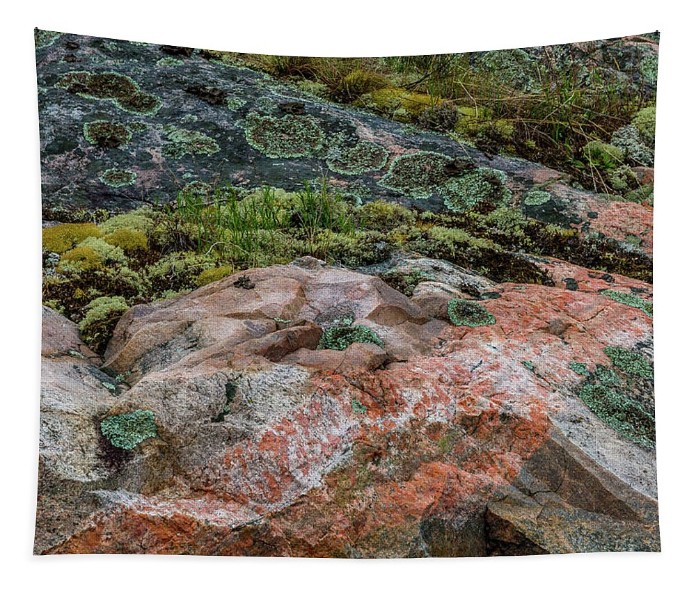 Abstract Tapestry featuring the photograph Moss And Lichen Abstract by Patti Deters