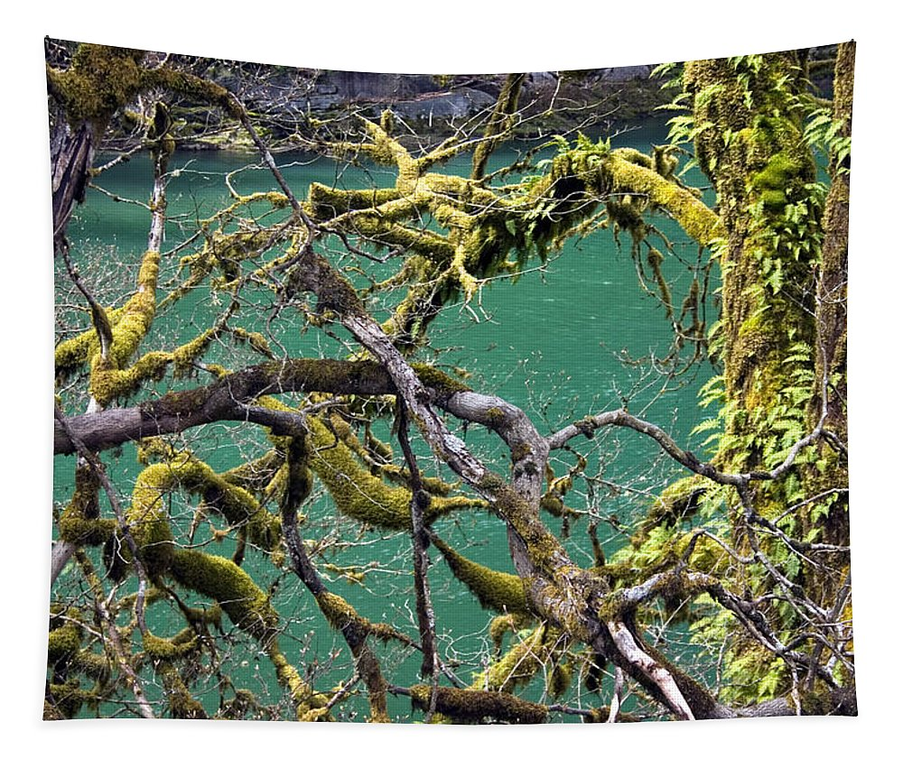 Moss Tapestry featuring the photograph Moss And Trees by Wendy Raatz Photography