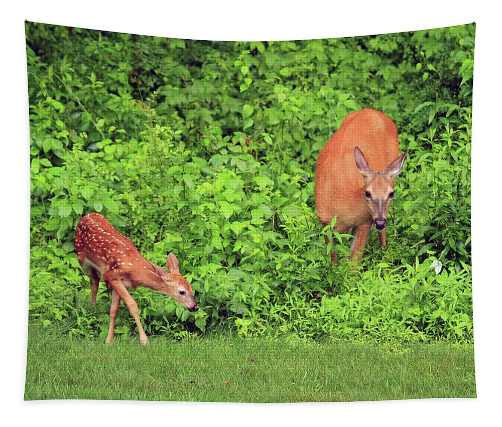Wildlife Tapestry featuring the photograph Mother And Child by Karol Livote