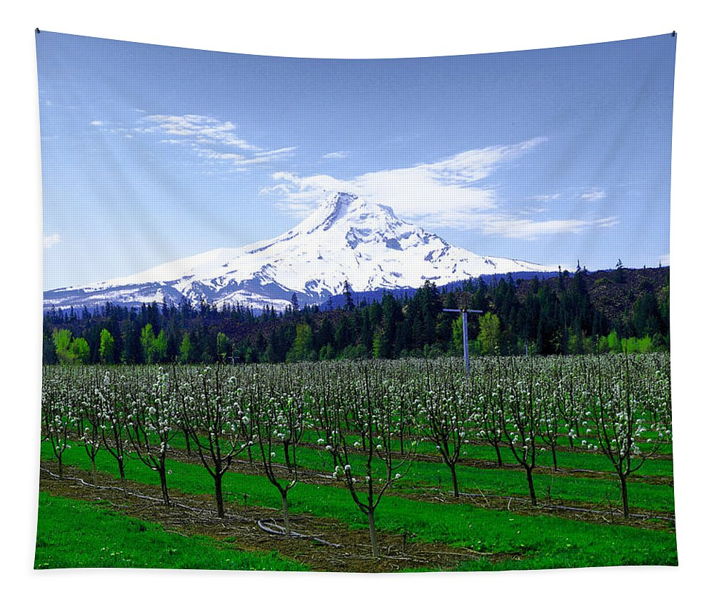 Mountains Tapestry featuring the photograph Mount Hood Behind Orchard Blossoms by Jeff Swan